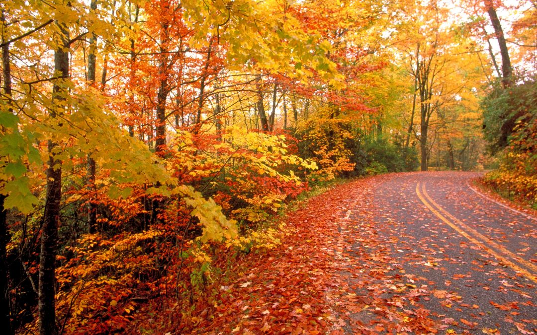 How do Leaves Impact Road Condition Data?